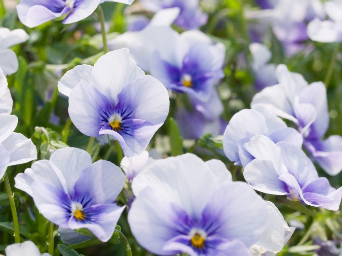 Zrób porządek z kwiatami