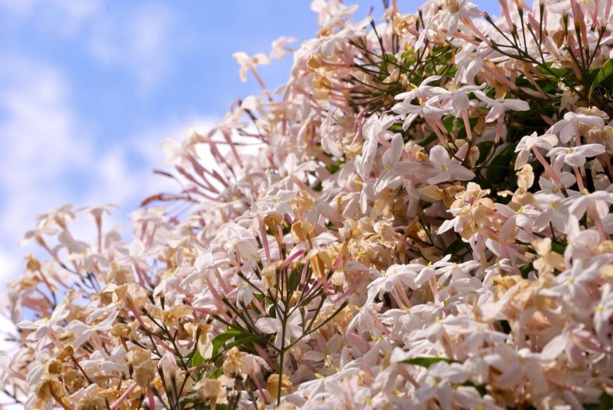 Jak ochronić rośliny?