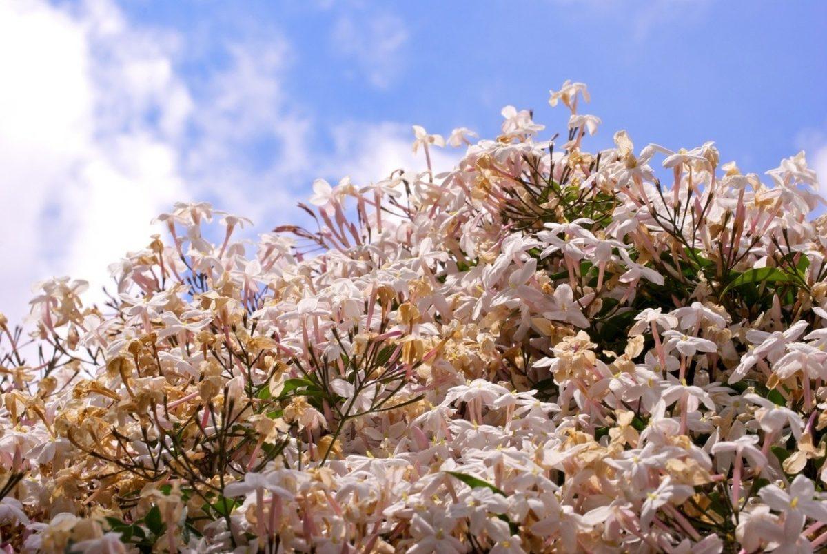 Śnieżna pierzyna chroni twoje rośliny!